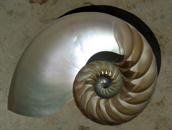 Nautilus Logarith